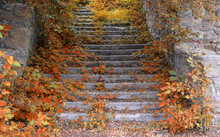 Autumn Road Up The Steps And Old Stone Walls Overgrown With Vegetation. Autumn Bright Landscape.