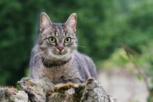Portrait Of A Beautiful Tabby Cat