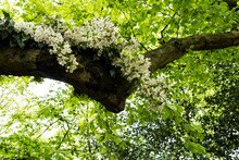Close Up Of Flower Garland In A Tree For A Woodland Naming Ceremony.