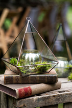 Antique Books And Candle Holder, Decorations For A Woodland Naming Ceremony