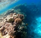 Fototapeta Fototapety do akwarium - rafa koralowa