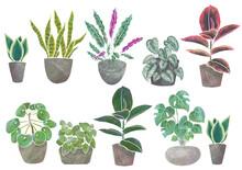 観葉植物 水彩風 インリア グリーン インドア セット
