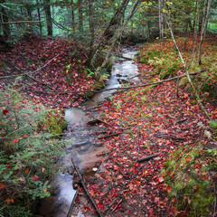 Running water stream in forest during autumn time