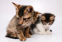Tres Pequeños Gatos