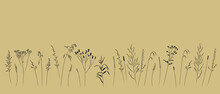 Field And Meadow Grasses, Black Contour Line. Sketch Of Medicinal Plants, Vector Drawing.
