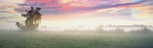Country Field In A Fog At Sunrise. Lonely Birch Tree Close-up, Silhouettes In The Background. Pure Golden Morning Sunlight. Epic Pink Clouds. Idyllic Rural Scene. Concept Art, Fairytale, Picturesque