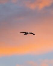 Seagull Flying Against Sunset Sky