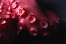 Octopus With Red Tentacles On Dark Table