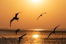 Freedom Scene Of Flying Seagulls With Orange Sunrise Sky.