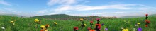 Green Meadows Under A Blue Sky, Hills Of Grass And Flowers, A Panorama Of A Meadow, 3D Rendering