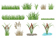 Set Of Illustrations Of Reeds, Cattails, Seamless Grass Elements.