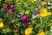 Blumen Sommer Garten Bunt Malve Blüten Bunt Mischung Wildblumen Bienen Insekten Artenschutz Natur Stadt Deutschland Beet Kräuter Farben Grün Gelb Magenta Pink Blau Selektive Schärfe Stimmung Flora