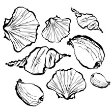 Isolated Sketch Of Seashells, Sea Life One Line Drawing, Sea Inhabitants Drawing On White Background