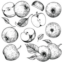 Vector Collection Of Hand-drawn Apples. Sketch Illustrations On A White Background. A Set Of Isolated Objects Of Vintage Engraving Style. For Advertising Design, Juice Packaging, Cider, Menu