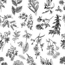 Hand Drawn Seamless Pattern Of Medicinal Herbs