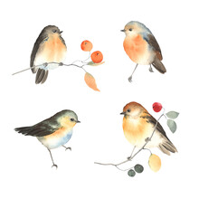 Set Of Abstract Cute Birds, Watercolor Colorful Collection Isolated On White Background, Decoration Birds For Your Design.