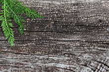 Gray Wood Background With Green Plant In The Corner