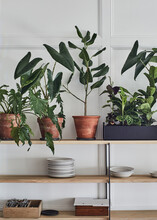 Plants In Restaurant