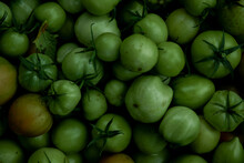 Reen Tomato (unripe) In Wicker Basket On Wooden Background. Unripe Green Tomato In Bowl For Fried Dish Or Salted Pickled Vegetables. Raw Green Tomato On Table For Dinner