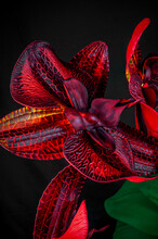 Red Flower In Dark