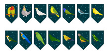 Flags Garland For Birthday Party With Tropical Birds On Colorful Dark Green Background. Bunting Wit Lovebird Cockatiel Cockatoo Macaw Parrots. Hand Drawn Kid Illustration. Vector Design Set.