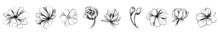 Flower Set. Illustration, Flower, Botanical, Drawing, Engraving, Design, Leaf, Vector, Garden, Detailed, Elegant, Botany. Set. Vintage Flowers. Vector Vintage Botanical Illustration. Invitation.
