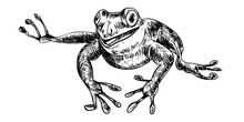 Sketch Running Toad On A White Background. Reptile Aquatic Animal Hand-drawn By Strokes In Vector.