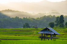 Good Atmosphere During Sunset With Misty On The Mountains And A Hut In The Middle Of Green Rice Terrace Fields At Mae Hong Son Province Thailand.