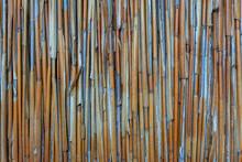 Reeds Background Texture