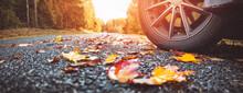 Car On Asphalt Road On Autumnal Day At Park