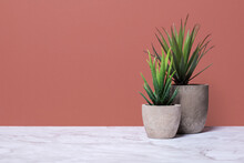 Two Aloe Plants In Grey Stone Pots On A Marble Surface Against A Brown Wall With Copy Space With A Right Side Composition