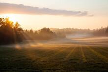 Morning Mist On Meadow