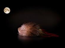 Lost Bird Feather In The Dark