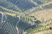 Douro Valley, Portugal. Top View Of River, And The Vineyards Are On A Hills. Summer Day In Terraced Vineyards. Concept For Travel In Portugal And Most Beautiful Places In Portugal. Unesco