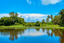 Tropical Landscape. Mountains, Palms And Blue Sky. Pure Nature. Lake With Mirror Reflections