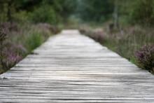 Ein Holzsteg Führt Durch Die Heidelandschaft
