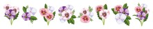 Pansy Flower. Hand Drawn Vector Illustration Of Garden Varieties Of Viola Tricolor On Transparent Background, Realistic Style. Flower, Romantic, Pansy, Vector, Bloom, Elegant, Illustration, Set