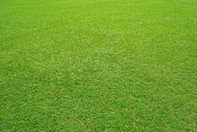 Nature Green Grass In The Garden, Lawn Pattern Texture Background, Perspective