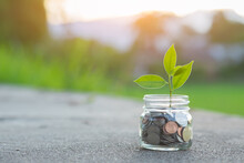 Saving And Pig Piggy Bank A Coin Glass On The Floor Nature Background
