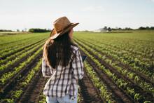 Woman Farmer Walking On Corn Field