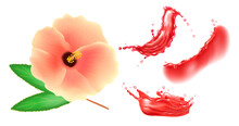 Set Of Pink Hibiscus Flower And Red Liquid Splashes. Vector Realistic Design Elements.