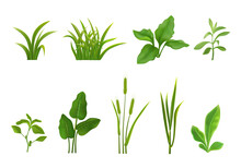 Grass Leaves Realistic Set