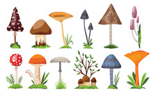 Collection Of Mushrooms And Toadstools. Illustration Of The Different Types Of Mushrooms On A White Background. Colorful Forest Wild Set Of Assorted Edible Mushrooms And Toadstools