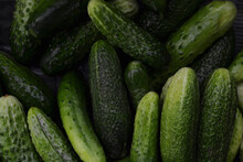 Ripe Green Cucumbers, Freshly Picked From The Garden And Washed With Water, Lie To Dry In The Open Air, Top View Flat Lay Close-up.