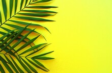 Green Palm Leaves Background On Yellow Color, Palm Leaf Frame