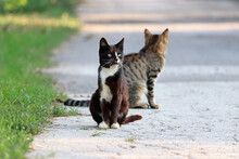 Two Cats Sitting On A Street. Portrait Of Black White Cat Outdoors