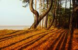 Fototapeta Na sufit - morze, wydmy, las, cienie