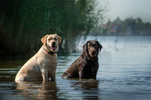 Retrievers Dogs Lovely Photos Of Dogs Fun Walk By The Water Cute Pets