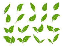 Leaf Icon. Green Leaves Of Trees And Plants, Various Shapes. Eco Vegan Sprout Or Bio Foliage Elements Vector Set