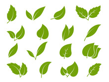 Leaves Icons. Young Green Leaves Trees And Plants Various Shapes, Herbal Tea Leaf Eco, Bio Foliage Landscaping Environment Vector Set